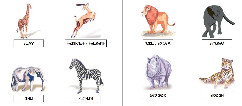 Photo of Lexique animal Amazigh de Mohamed Oussous [PDF]
