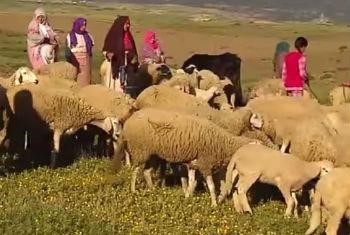 rural Morocco | UN News